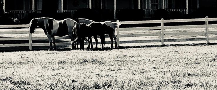Mattituck Ponies