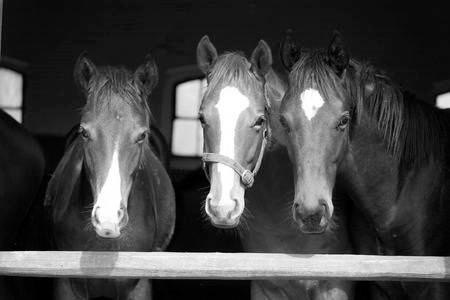 strange horses