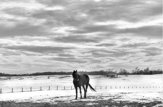 winterhorsefield