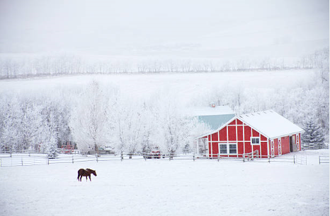 winterhorseredbarn