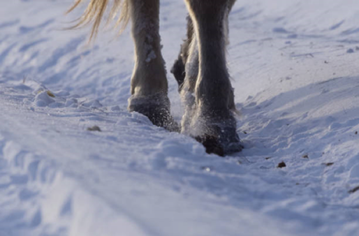 horse winter walk